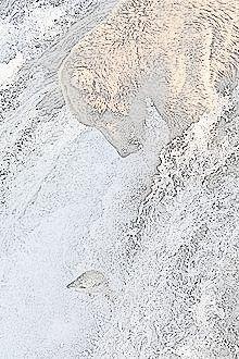 Bjørnen og løva